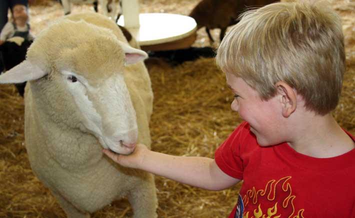 visita-a-una-granja-escuela